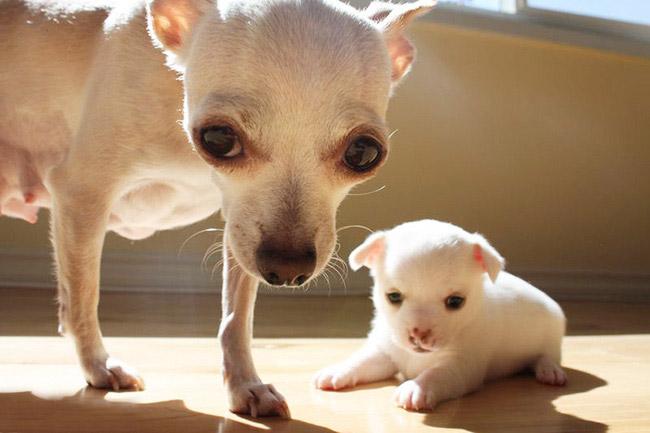 собачка с щенком