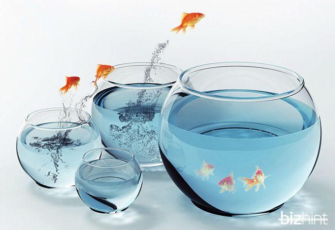 рыбки перепрыгивают в аквариумы побольше
