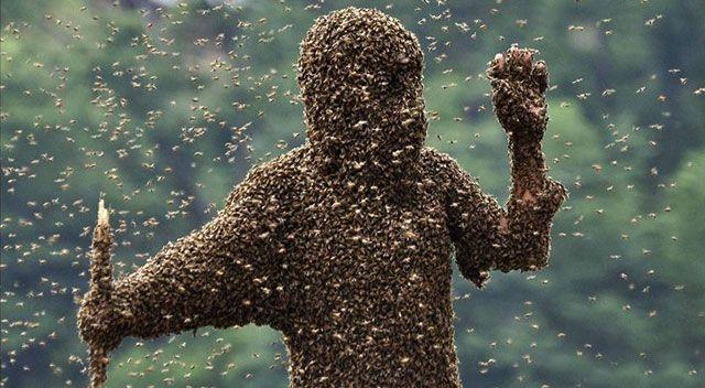 Пасечник покрытый пчелами