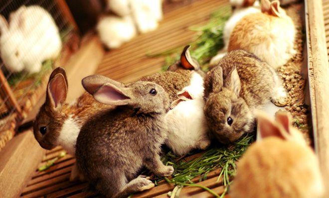 Крольченки едят
