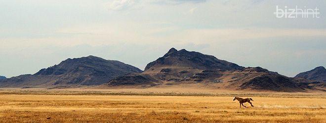 лошадка бежит по пустыни