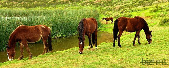 Кони пасутся на зеленом лугу