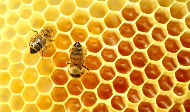 Соты с медом и пчелки