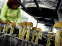 Выращивание грибов в домашних условиях