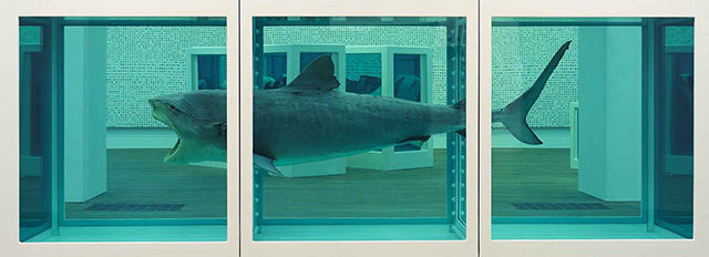 Чучело тигровой акулы