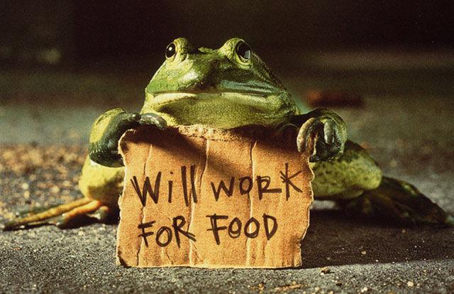 Жаба will work for food
