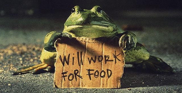 Жаба с табличкой Работаю за еду