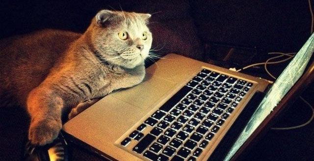 Кот за ноутбуком