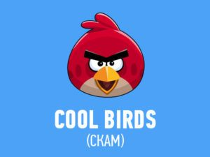 cool-birds-scam-preview